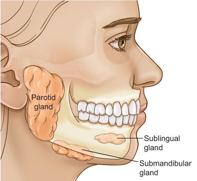 Types of major salivary glands