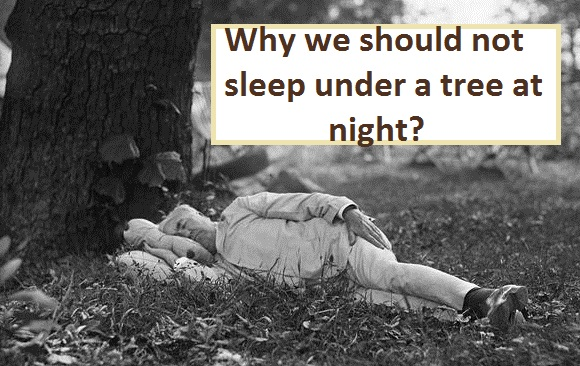 Why we should not sleep under a tree at night?