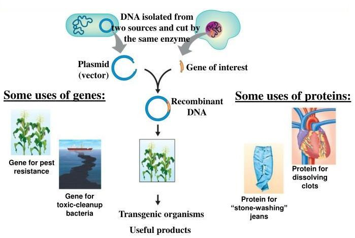 uses of recombinant DNA technology