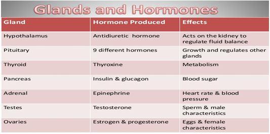 human body glands and hormones pdf