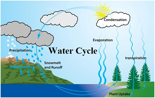 cbse class 9 science chapter notes natural resources  main steps involved in water cyles are