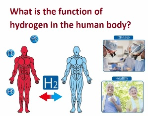 What is the function of hydrogen in the human body