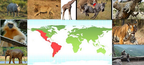 wild Animal Distribution