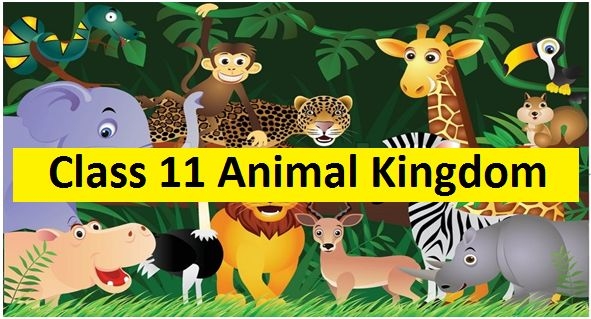 Animal Kingdom: NCERT Solutions
