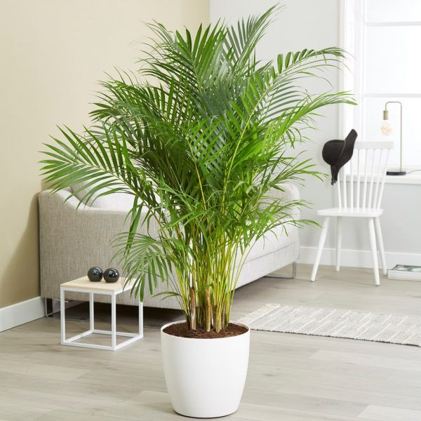 Top 5 indoor Plants that help in combating air pollution Names Air Houseplants on spices names, grass names, berries names, wildflowers names, veggies names, plants names, pets names, design names, garden names, cacti names, photography names, nuts names, furniture names, weather names, insects names, ornamental grasses names, herbs names, leaves names, lawn care names, pottery names,