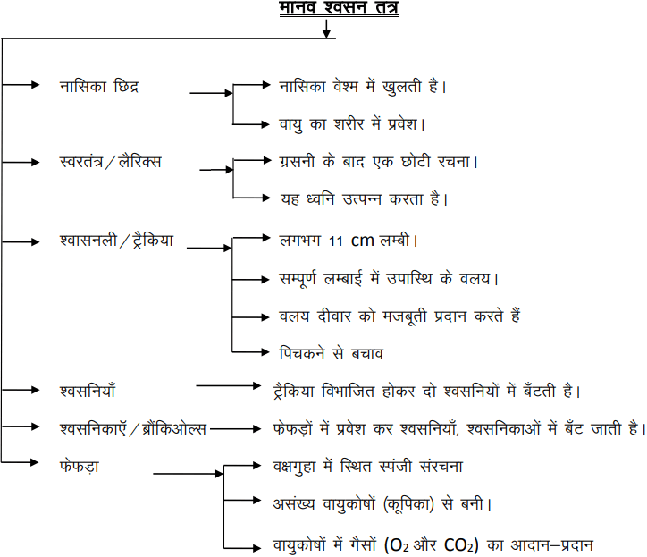 bihar board revision notes
