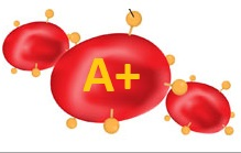 blood group A+