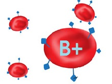 blood group B+