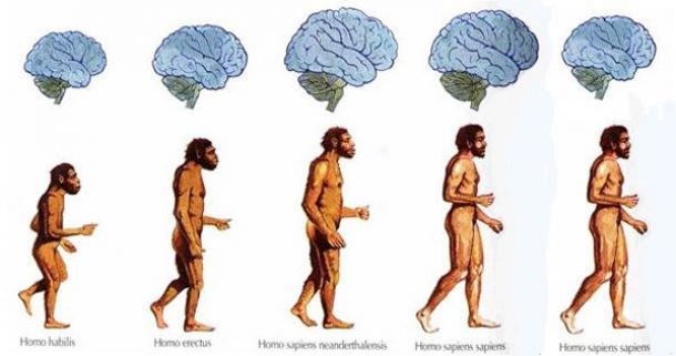 brain shrinking humans