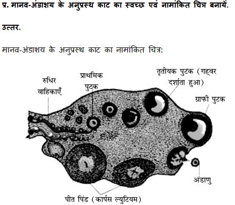 bseb class 12 biology paper