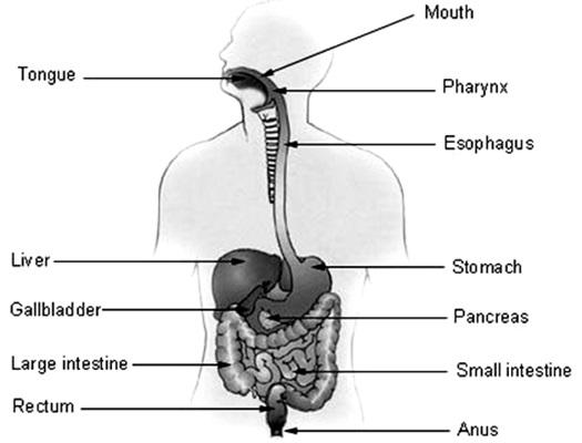 CBSE Class 10 Science Exam 2020: Important Biology ...