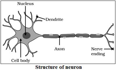 Components of Reflex Arc