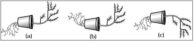 Tropic Movement in Plants