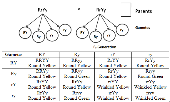 Combination Characters in F2 Progeny, Heredity and Evolution