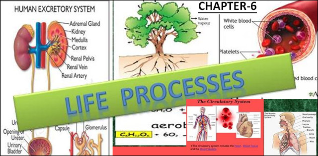 NCERT Class 10th Science Chapter 6