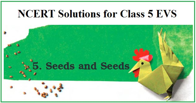 NCERT Class 5 Solutions EVS Chapter 5 Seeds and Seeds