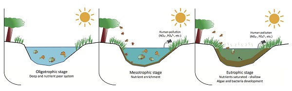 Eutrophication Cycle