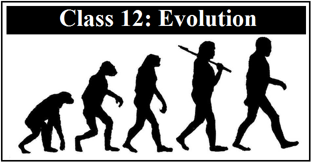 NCERT Exemplar Solutions: Evolution