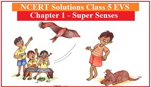NCERT Solutions Class 5 EVS Chapter 1 Super Senses
