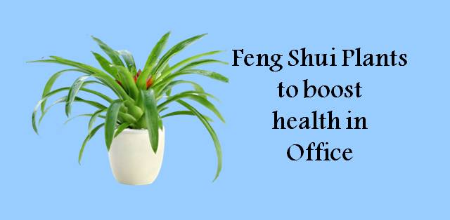 5 feng shui plants that will boost your productivity at for Feng shui for health
