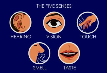 Five Senses in Human Being