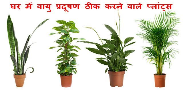 Indoor plants to check air Pollution