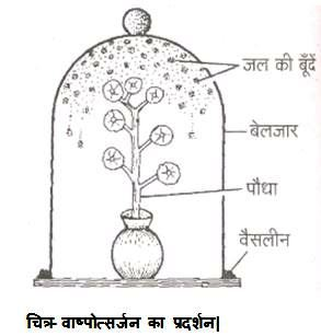 Kinds of Transpiration