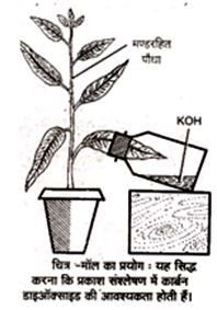 Demonstration of necessity of CO2 in Photosynthesis