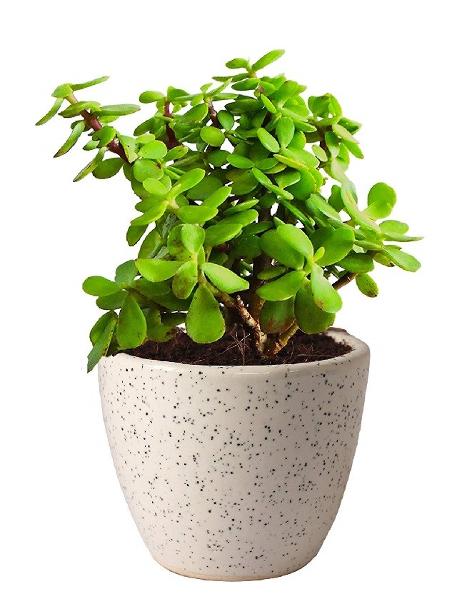 Table Plant Pot