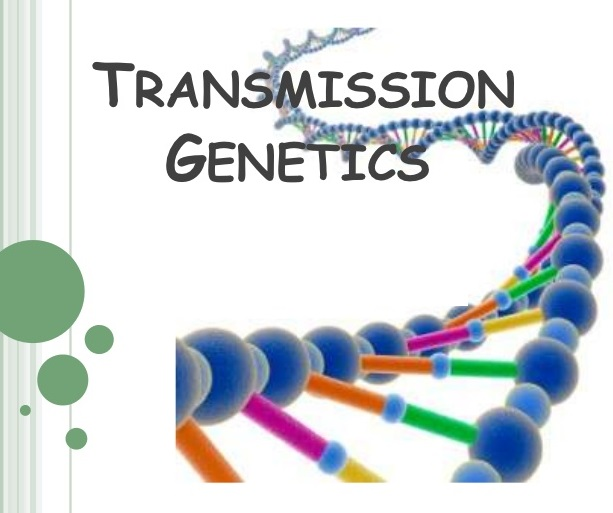 What is transmission genetics