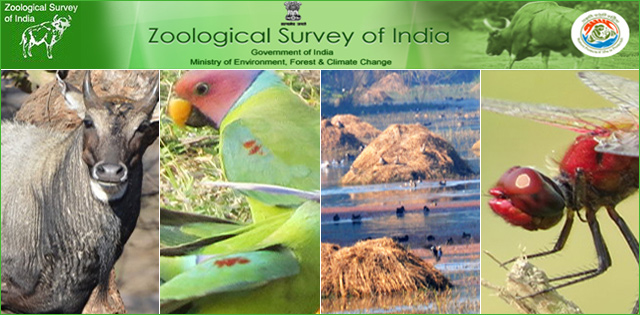 Zoological Survey of India Recruitment 2018