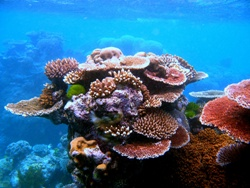 World Heritage coral reefs likely to disappear by 2100 unless CO2 emissions drastically reduce