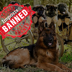 Dogs-Ban