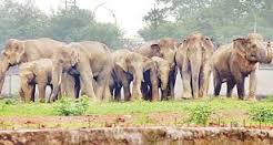 Elephant Census Report 2015