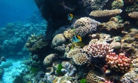 United Nations declines to label struggling Great Barrier Reef endangered, leaving scientists puzzled