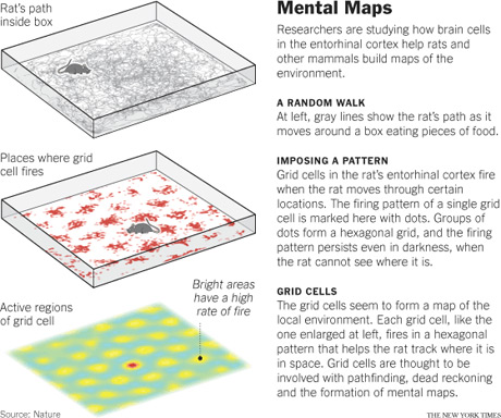 Brain Global Positioning System