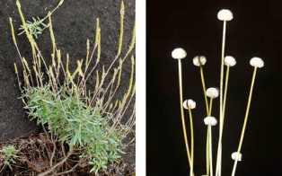 new plant species