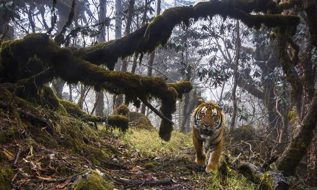 Anil Kumble appeals to save tiger on International Tiger Day