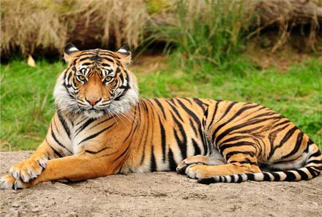 Telangana to have eco-friendly bridges for movement of tigers