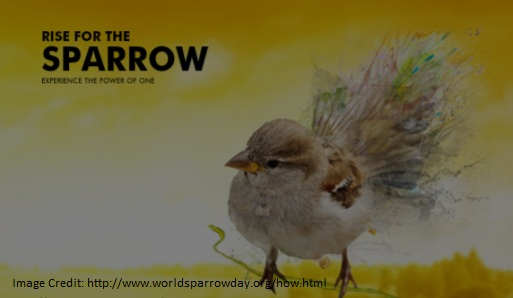 World Sparrow Day 2017 observed