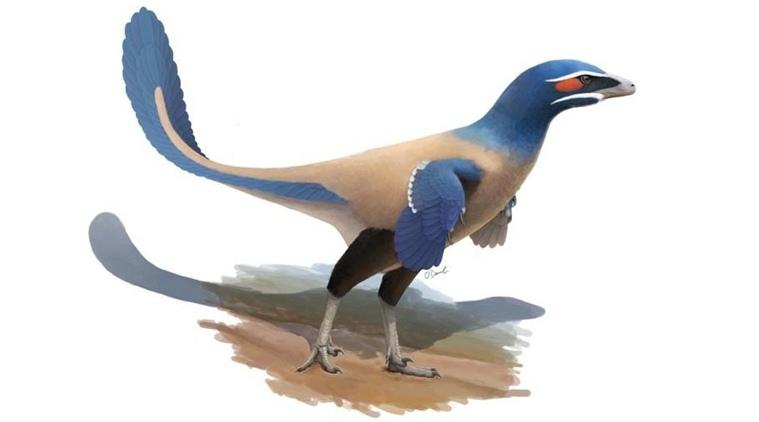 New species of bird-like dinosaur identified in Canada