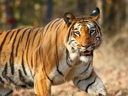 cobett tiger reseve uttarakhand