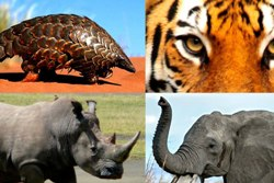 World Wildlife Crime Report