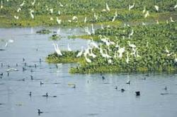 wetlands India
