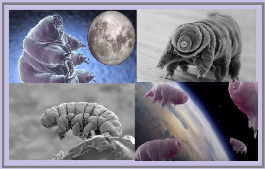 Are Tardigrades really polluting Moon's atmosphere?