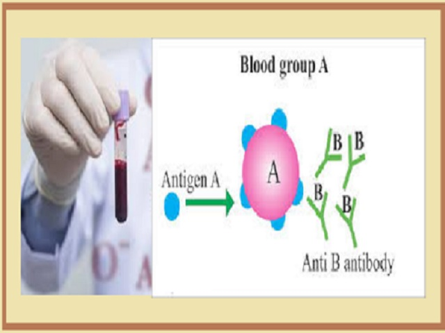 "What does Blood Group Type ""A"" mean"