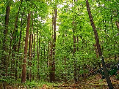 Deciduous-Forests-india