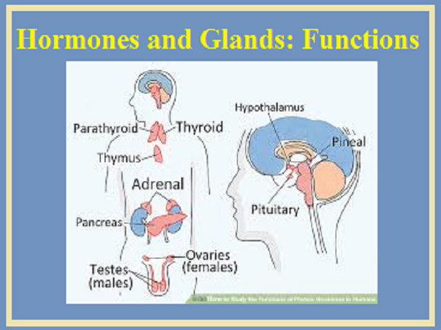 Hormones and Glands