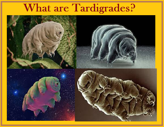 What are Tardigrades?