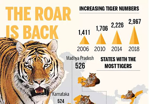 number-tigers-india-2018